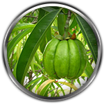 Garcinia Cambogia Ingredient Definition