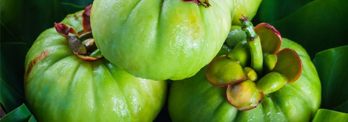 preview-full-Garcinia-Cambogia-plant