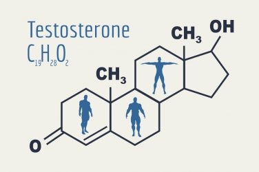 testosterone diagram