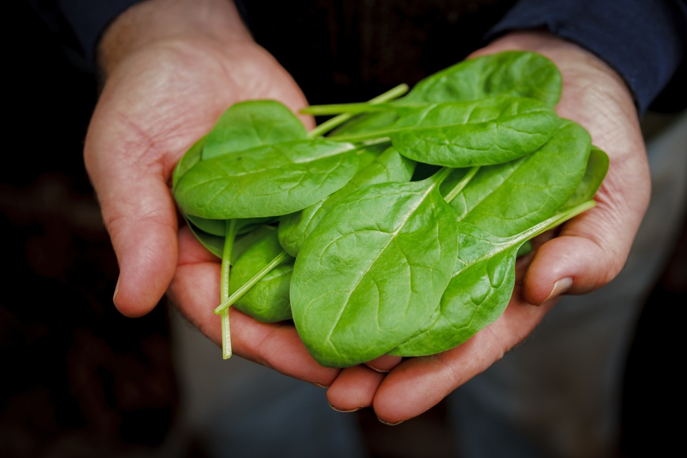man holding spinach leaves